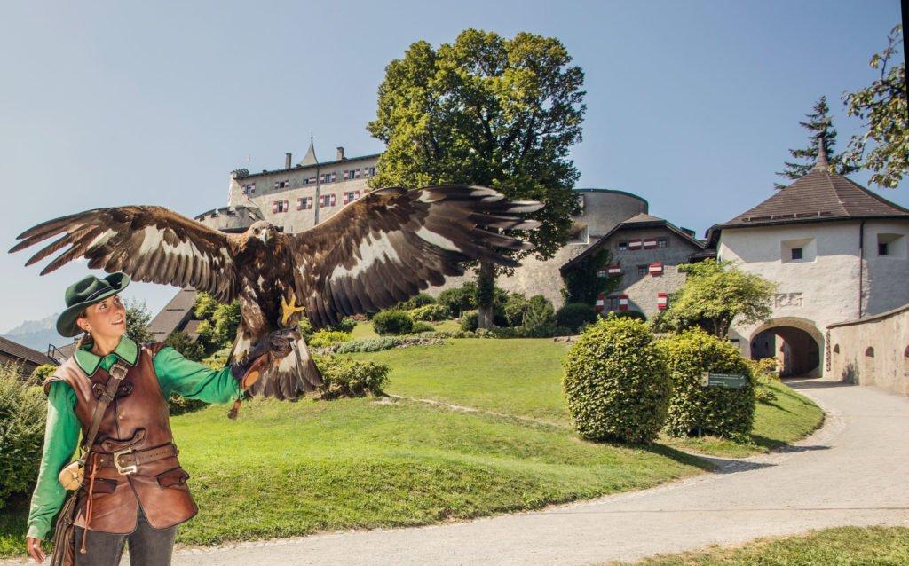 Burg Hohenwerfen Greifvogelschau